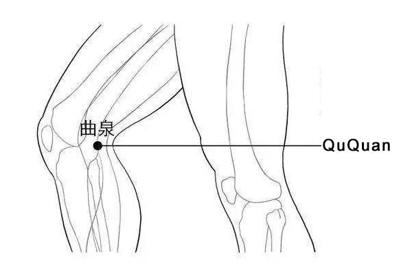 QuQuan acupoint