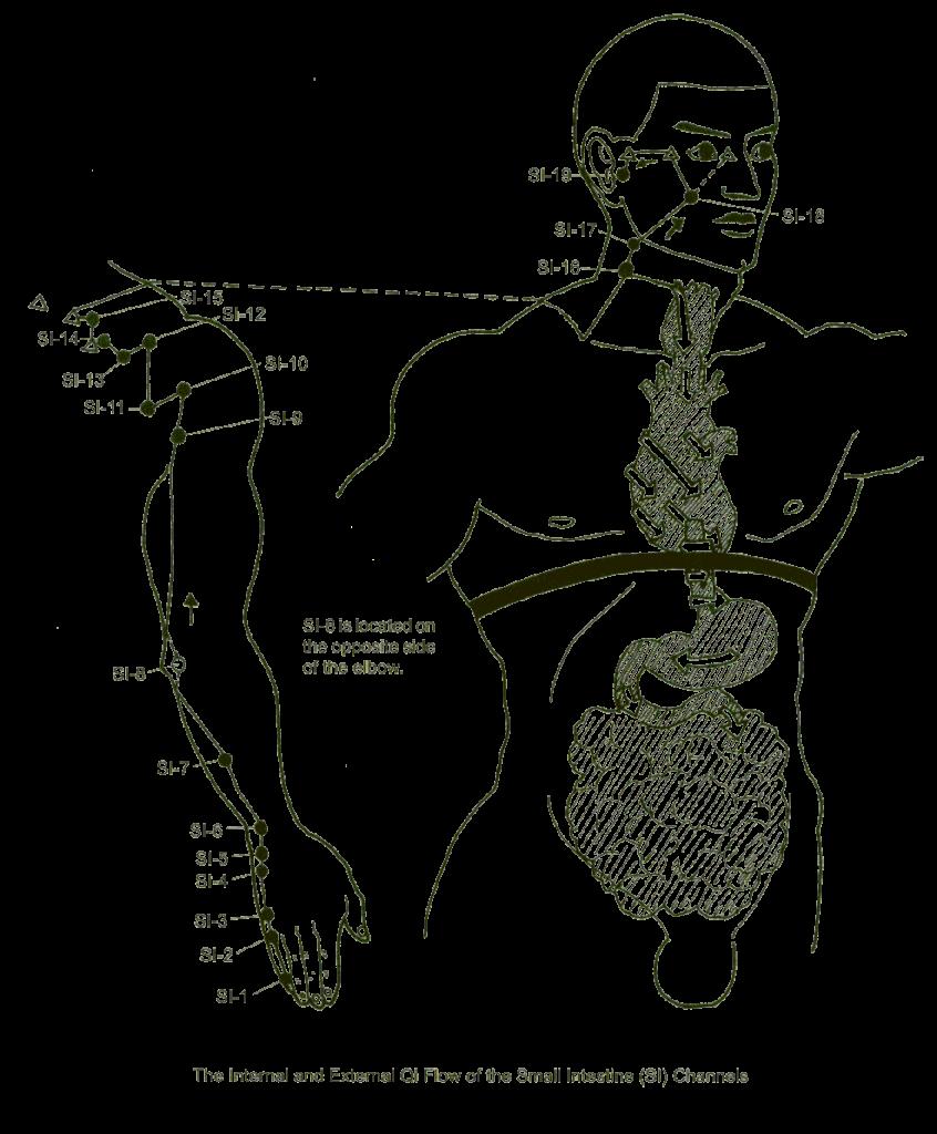 small intestine meridian point