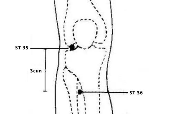 ST 36 acupoint zusanli